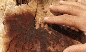 img_arborist Certified Arborists